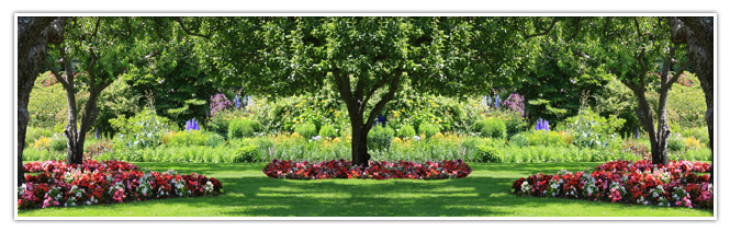 Dexter 39 s tree services landscaping st louis mo for Tree and garden services